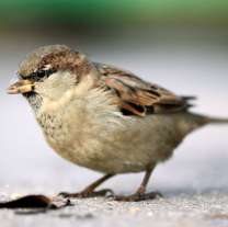 What Is SparrowFare